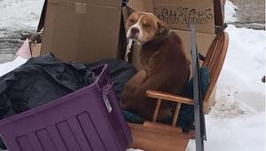 To, co zrobił porzucony, zagłodzony pies na widok jedzenia, odebrało mowę wolont