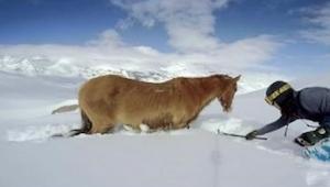 Snowboardzista na stoku natyka się na konia, to co postanawia z nim zrobić jest
