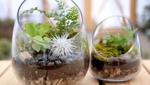 Ten instruktaż jak zrobić własny ogródek-terrarium jest wyjątkowo prosty, a efek