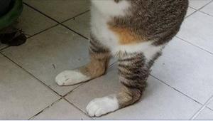 Myślała, że znalazła typowego, bezpańskiego kota, ale kiedy podniosła go z ziemi