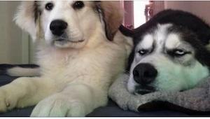 12 psów sfotografowanych w idealnym momencie... Ich spojrzenia mówią wszystko!