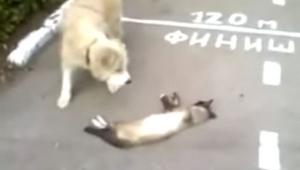 Pies myślał, że kot nie żyje, ale już chwilę później stało się coś niesamowitego