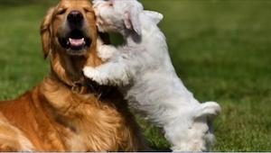 Dlaczego psy nas liżą? Wypowiedzi weterynarzy zaskakują!