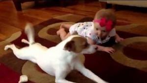 Nie uwierzycie co zrobił ten pies gdy mała dziewczynka bezskutecznie próbowała r