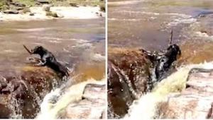 Psa porwał prąd rzeki. To co zrobił jego brat jest niewiarygodne!