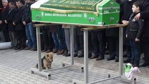 Ten pies usiadł przy trumnie z bardzo smutnym wyrazem oczu... Nikt się nie spodz