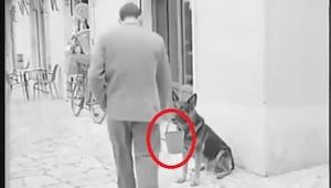 Zdziwił się widząc psa trzymającego w pysku wiaderko, ale po chwili wszystko zro