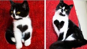 Te kotki mają już ponad 75 tysięcy obserwujących na Instagramie. Zobaczcie dlacz