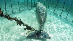 Nurkowie podczas jednej z wypraw odkryli podwodne klatki, a w nich scenę jak z k