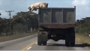To, co zobaczył kierowca jadący za ciężarówka, nie mieści się w głowie! A wydarz