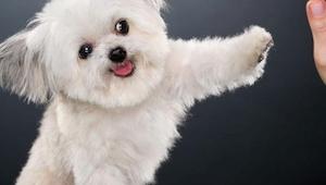 Kiedy zobaczyłam tego maleńkiego psa nie spodziewałam się, że może on robić TO.