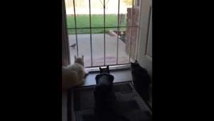 Kiedy zobaczyłam koty obserwujące ptaka sądziłam, że zaraz się na niego rzucą. K