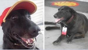 Ktoś porzucił psa na stacji benzynowej. To najlepsze, co mogło spotkać właścicie