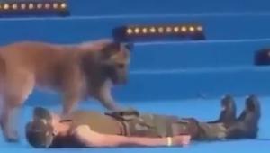 Pies podbiegł do leżącej kobiety. To, co zrobił, wywołało burzę oklasków i wiwat