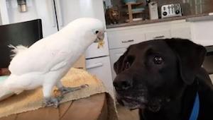 Nikt nie chciał im uwierzyć, że ich papuga i pies tak się zachowują. Wtedy opubl