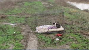 Zamknięty i przemarznięty pies czekał w deszczu na powrót właścicieli. Kiedy zob