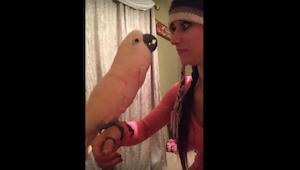 Ta papuga żaląca się swojej właścicielce to najśmieszniejsze wideo jakie dzisiaj