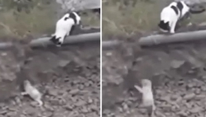 Porzucony szczeniak nie może się wydostać z rowu. Na ratunek przybywa mu niespod