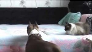 Myślała, że jej pies wyje z tęsknoty, gdy wychodzi z mieszkania. To, co zobaczył