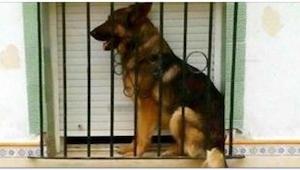 To, co zrobili właściciele tego psa, nie mieści się w głowie!