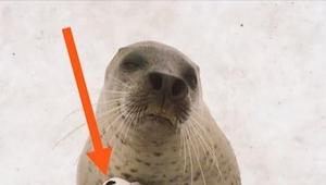 Zwiedzający zoo nie mieli pojęcia co trzyma foka. Kiedy w końcu zauważyli do cze