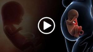 To wideo pokazuje co się dzieje z organami kobiety podczas ciąży - niesamowite c