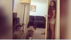 Zaaferowany pies szuka swojej pani. Tego nagrania nie da się obejrzeć bez szerok
