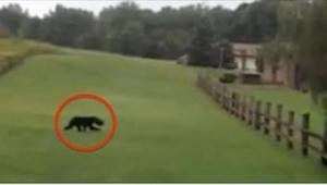 Para uciekała przed dzikim zwierzęciem, ale kiedy zobaczyli, że ma coś dziwnego