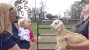 Koza zaczyna meczeć, ale dopiero gdy ta dziewczynka zaczyna ją naśladować nie mo