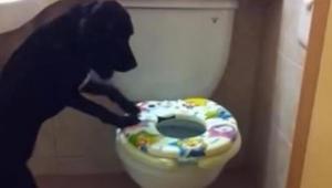 Właściciel w sekrecie nagrywa swojego psa gdy ten znika w łazience. W 16s nie mo