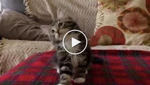 Kiedy właścicielka puściła właśnie tę piosenkę jej kot zrobił coś niesamowitego!