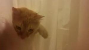Kiedy ten kot czegoś chce to będzie szedł po trupach, żeby to osiągnąć... Zobacz