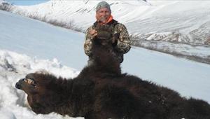 Zabicie niedźwiedzia w stanie hibernacji? Niedźwiedzicy z młodymi? Teraz w Stana