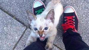 Ten bezdomny kociak podbiegł do mężczyzny i nie chciał go opuścić - mamy łzy w o