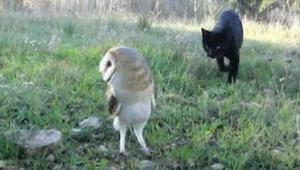 Kiedy ten kot zaczął skradać się w kierunku sowy spodziewałam się najgorszego...