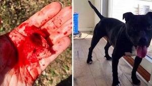 Kiedy ta kobieta zdała sobie sprawę co prawie zjadł jej pies natychmiast zadzwon