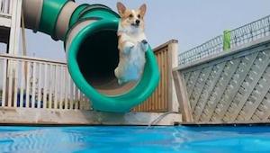 Masz zły dzień? Obejrzyj jak te maluchy świetnie bawią się w basenie - uśmiech g