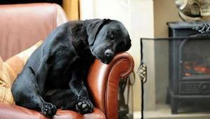 Mężczyzna adoptował psa, a wraz z nim dostał list od poprzedniego właściciela -