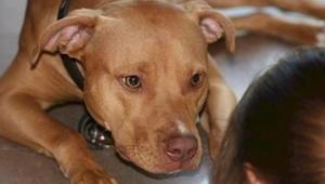 Co to znaczy, że Twój pies się o Ciebie opiera lub wpatruje głęboko w oczy? Prze