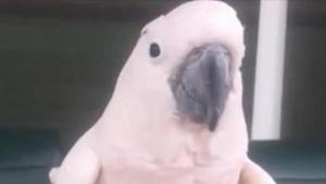 Papuga puściła głośnego bąka... Jej reakcja? Nie możemy przestać się śmiać!