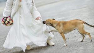 Kiedy pies jednego z gości weselnych rzucił się na nastolatkę nikt nie spodziewa