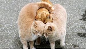 20 zdjęć zwierząt, które pokazują, że miłość dopadnie każdego... Zdjęcie nr 12 j