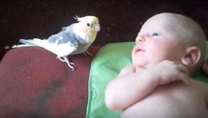Rodzice obawiali się konfrontacji pomiędzy domową papugą i ich noworodkiem. Zoba