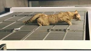 Ten kot to największy dziwak o złotym sercu, jakiego widziałam wśród czworonogów