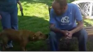 Pies ostrożnie wącha człowieka, którego w pierwszej chwili nie poznał... Po seku