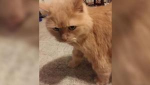 Młoda kobieta zapytała w schronisku o kota, którego nikt inny nie chciał adoptow