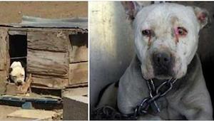 Pies miał być przykuty do łańcucha przez 2 lata podczas gdy jego właściciel prze