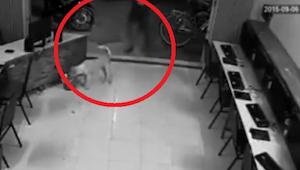 Mężczyzna chciał kopnąć bezdomnego psa, jednak w 8 sekundzie kamera zarejestrowa