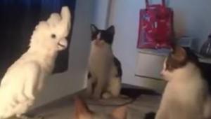 Papuga udaje kota, a prawdziwe kocięta nie wiedzą jak się zachować - urocze i pr