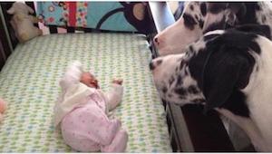 Co się stanie, jeśli zostawicie noworodka sam na sam z psem? Sami zobaczcie!
